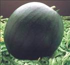 anguria nera
