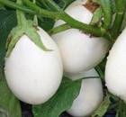 melanzana bianca