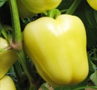 peperone citrino