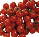 pomodoro ciliegia