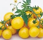 pomodoro ciliegia giallo