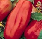 pomodoro scatolone