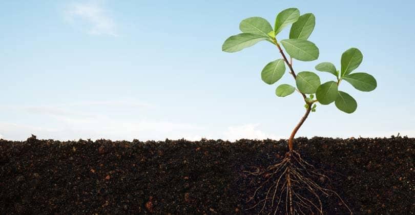 Nell orto cosa seminiamo a febbraio nell 39 orto cosa for Cosa seminare a febbraio