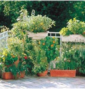 Arte di coltivare i fiori | Arte di coltivare i fiori - Zanatta ...