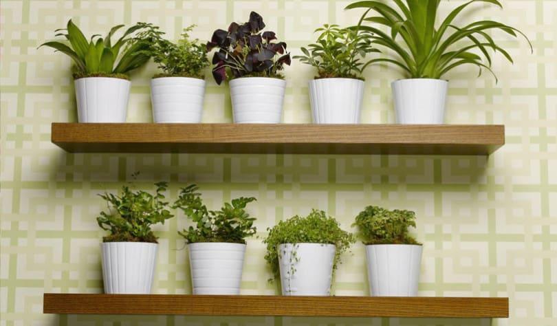 Super ARREDARE con le piante | arredare con le piante ZE29