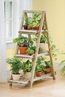 scala-con-piante