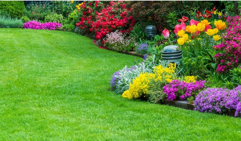 Il giardino mediterraneo zanatta alberto for Giardinaggio e fiori