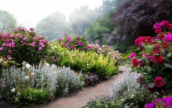 Il giardino mediterraneo zanatta alberto for Giardino mediterraneo