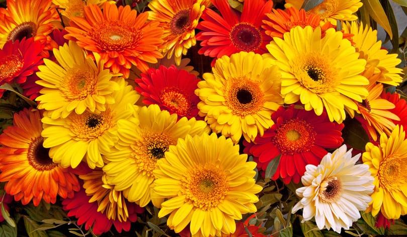immagine floricoltura