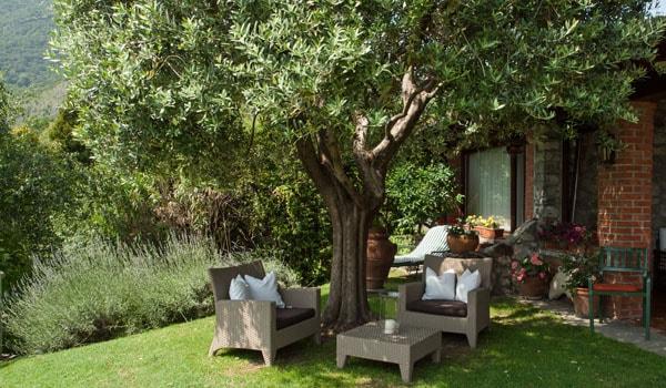 Gli alberi in giardino