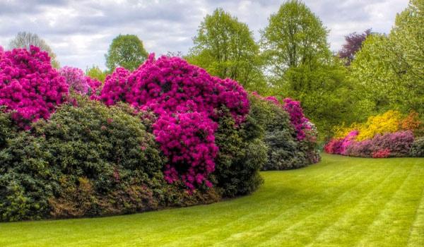 arbusti giardino