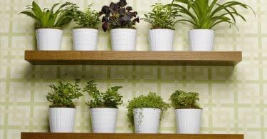arredare-con-le-piante