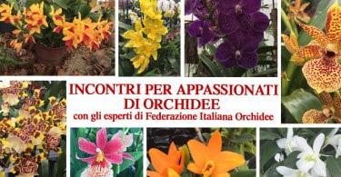 incontri con la federazione italiana orchidee