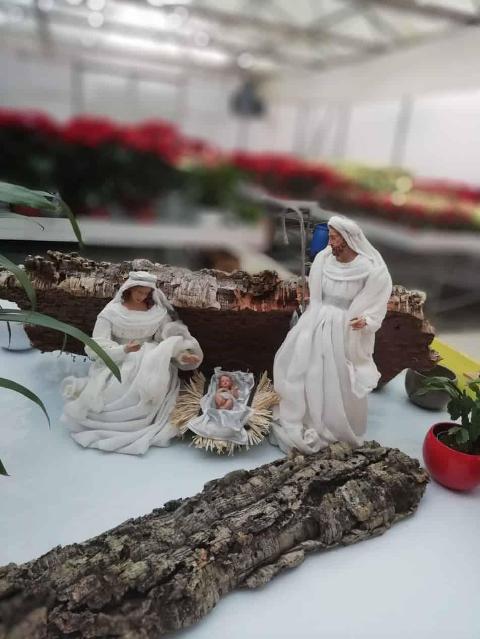 Natale in Vigna 2018 03